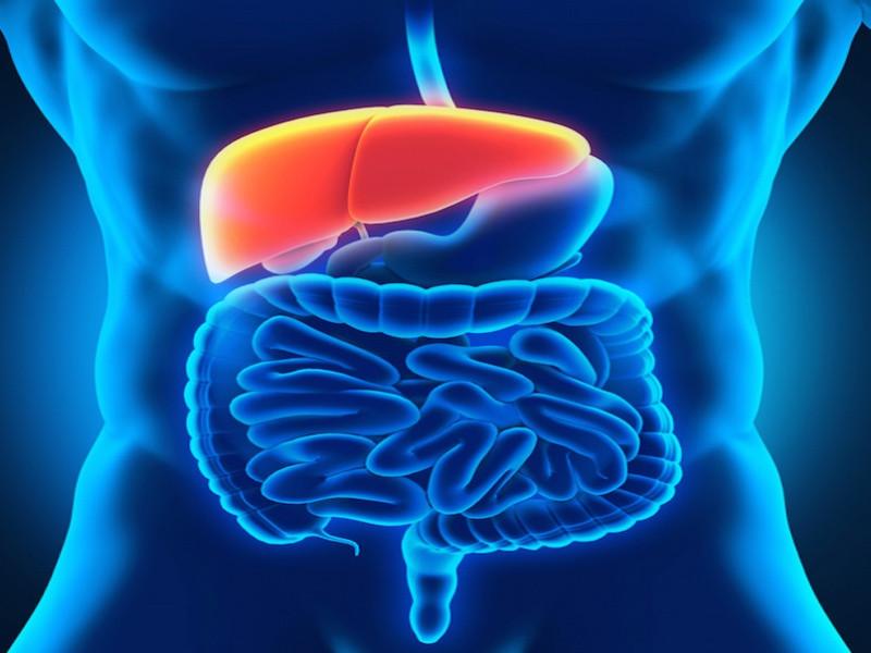 Pankreas-Krebs ebnet ungewöhnlich früh den Weg für Leber-Metastasen